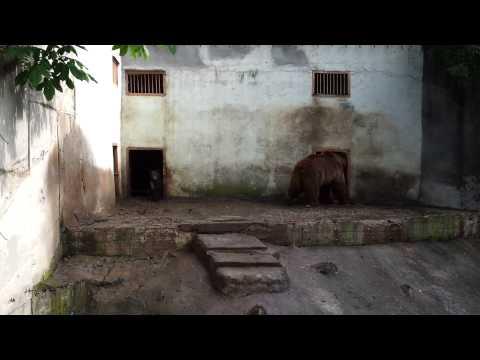 Bears in Lovech Zoo
