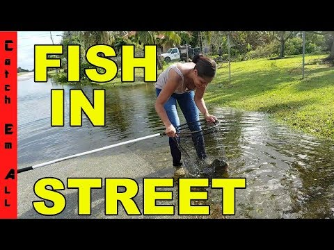 FISHING in THE STREET! Catching EXOTIC Fish in HURRICANE FLOODING!