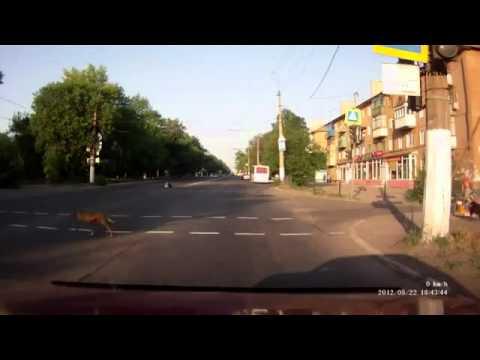 Chú chó tuân thủ luật giao thông-Yume TTNV
