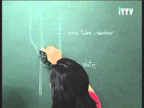 iTTV SPM Form 5 Biology Chapter 1 Transport (Transport of Substance in Plants) - Exam/Tips