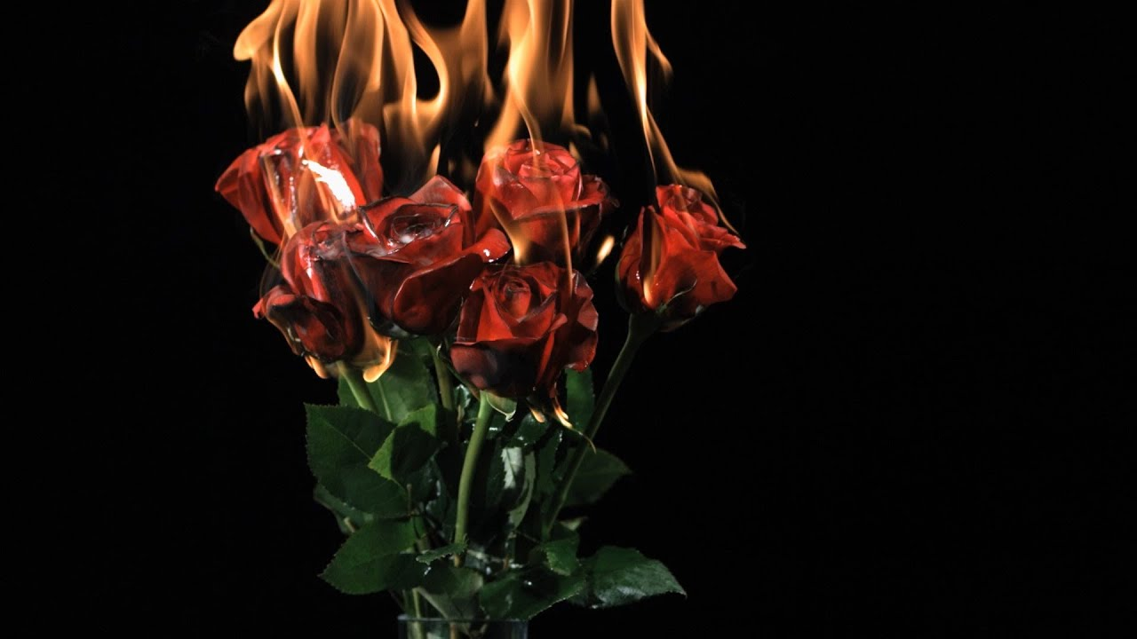 Black Abstract Wallpaper Free Slow Motion Footage Burning Roses Youtube