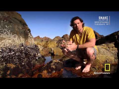 Secret Life of Predators S01 E04 Wet HDTV