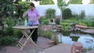 Dawn Soap & Garden Pests : Grow Guru