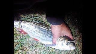 Неспокойная ночь на реке или ночная  Рыбалка Северском Донце