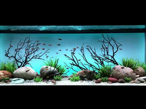 Daylight Background Fades With The Serene Freshwater Aquarium LED Kit In 4K