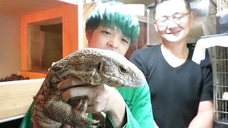 浜ちゃんも大きくなるといいな♪ MZ爬虫類まこぽんさんのチャンネル http...