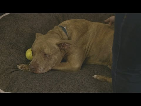 "Senior Dog Tanga Finally Gets His ""Forever Home"" thumbnail"