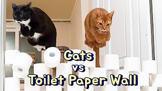 Cats vs Toilet Paper Wall (Visible Wall Challenge)