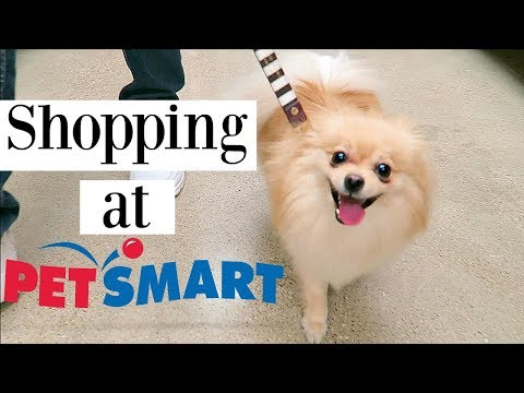POMERANIAN GOES SHOPPING AT PETSMART! Dog Haul Toys treats & clothes