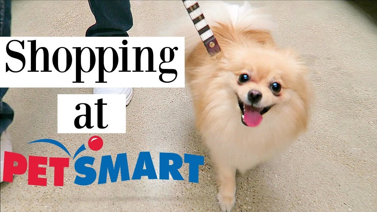 POMERANIAN GOES SHOPPING AT PETSMART Dog Haul Toys Treats Clothes