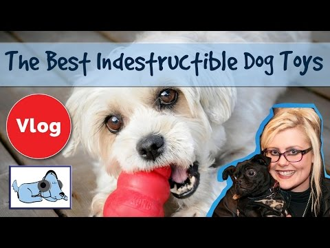 Five Best Indestructible Dog Toys! Dog Toys for Aggressive Chewers, Strong Dog Toys 🐶 #REVIEWVLOG01