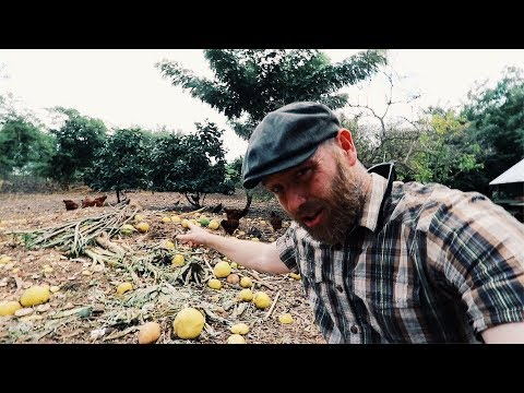 300 Chickens THRIVE on this Deep Mulch System