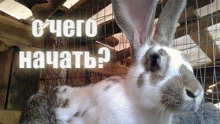 Разведение кроликов - с чего начать?
