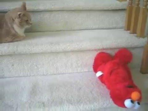 TMX Elmo Cat Movie