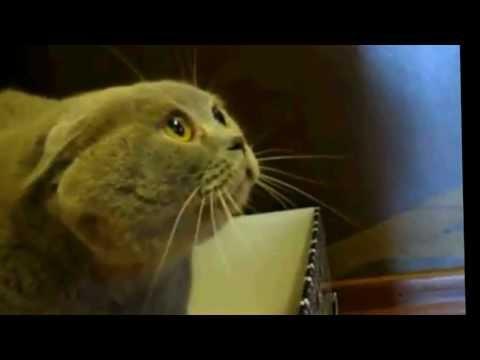 น่ากลัว แมวโหดที่สุดในโลก