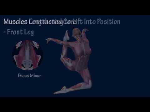 How to Stag Jump Muscle Training Program EasyFlexibility