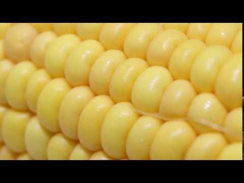 slob on my knob, like corn on the cob, corn on the cob, corn on the cob, corn on the co...