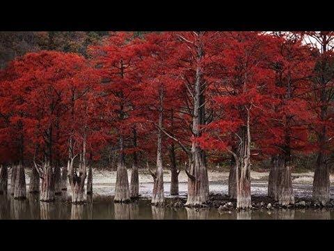 Сукко. Кипарисовое озеро. Красные кипарисы. (Папа может)