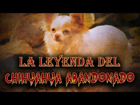 La Leyenda Del Chihuahua Abandonado