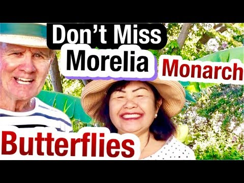 Monarch Butterfly Discover A Hidden Jewel Of Morelia Mexico Sanctuary Tour