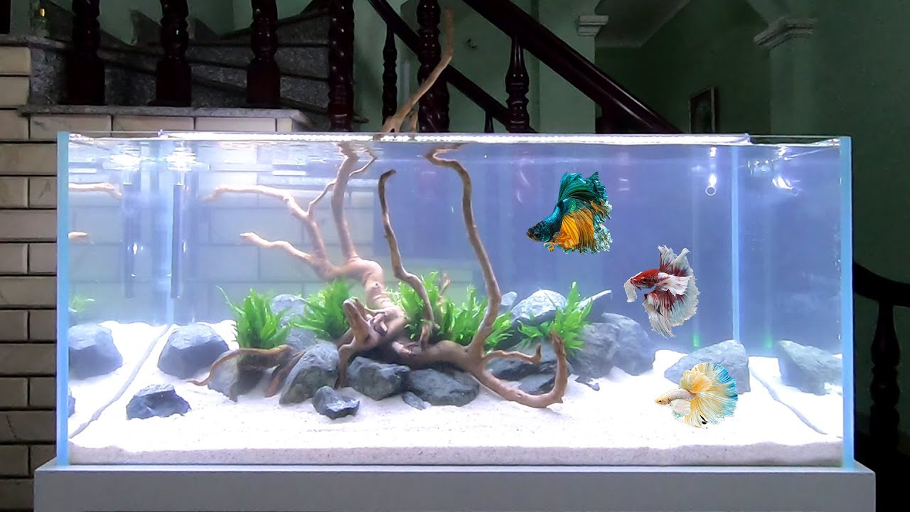 How To Make Simple Aquascape In Living Room Diy Aquarium Fish Tank Decoration Ideas No Co2 Youtube