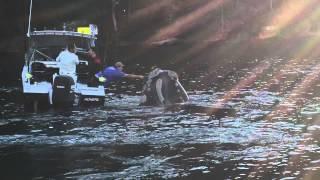 حوت يطلب المساعدة من صيادين استراليين (فيديو)
