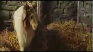 Alphaville - Lassie Come Home