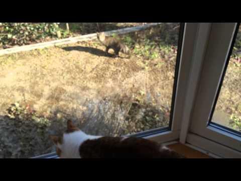 猫に聞かせると絶対反応する鳴き声