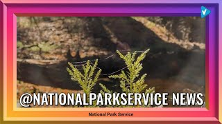@nationalparkservice News: Go, short tree. It's your Earth Day! With necks-turned-straight-up,