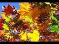 ФОНОГРАММА Осень жизни это жатва mp3