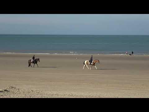 Paarden vanaf het strandterras Strandhuisje Nieuwvliet