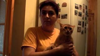 Счастливая история рыжего кота