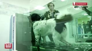 Водная реабилитация для больных животных
