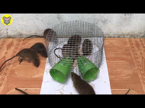 Amazing!! 8 Mice a night 🐀 Best mouse/ Rat Trap 🐀Good idea Mouse Trap 🐀 Pop Rats