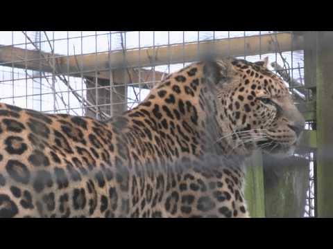 A Small Documentary on Borth Zoo