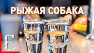 Рыжая собака — рецепт коктейля Едим ТВ