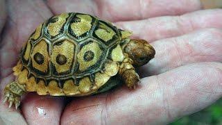 Самые маленькие животные в мире. Топ 10! The smallest animals in the world