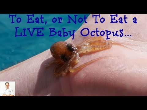 Lucky Baby Octopus | Last Day Deep Sea Fishing