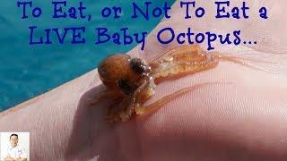 Lucky Baby Octopus | Last Day Deep Sea Fishing