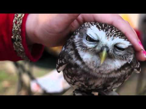 Krásné sovy. Lovely Owls.