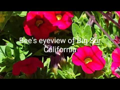 Bee's eyeview of Big Sur