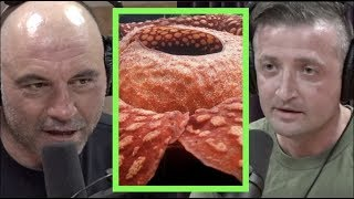 Corpse Flowers and Other Oddities w/Michael Malice | Joe Rogan