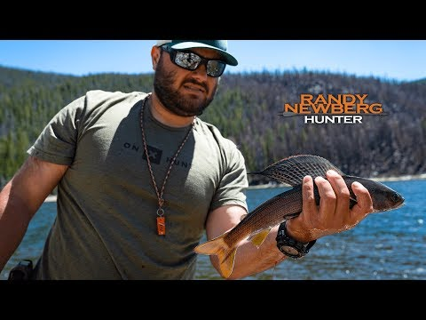 Grayling Fishing In Montana (Catch And Cook)