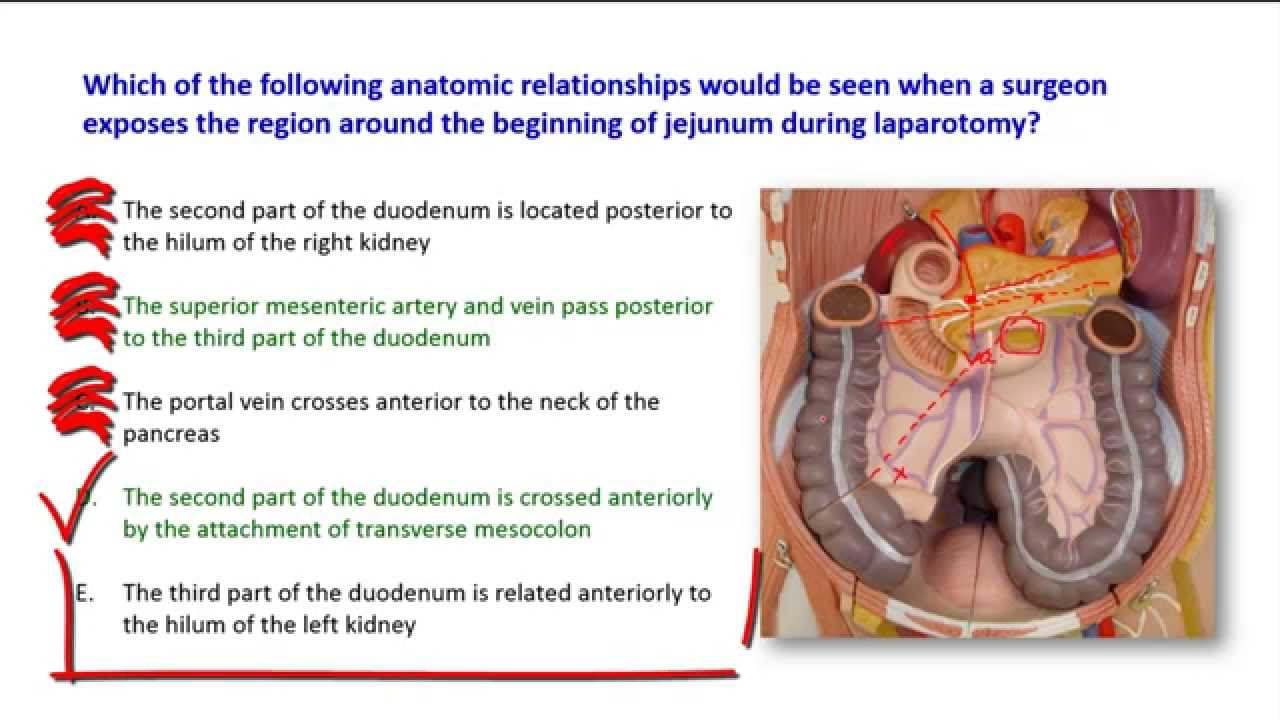 A short talk on the relations of the duodenum - YouTube