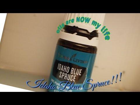 idaho-blue-spruce!!!!