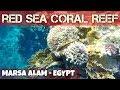 Beautiful coral reef at Port Ghalib Resort - Egypt - 2018