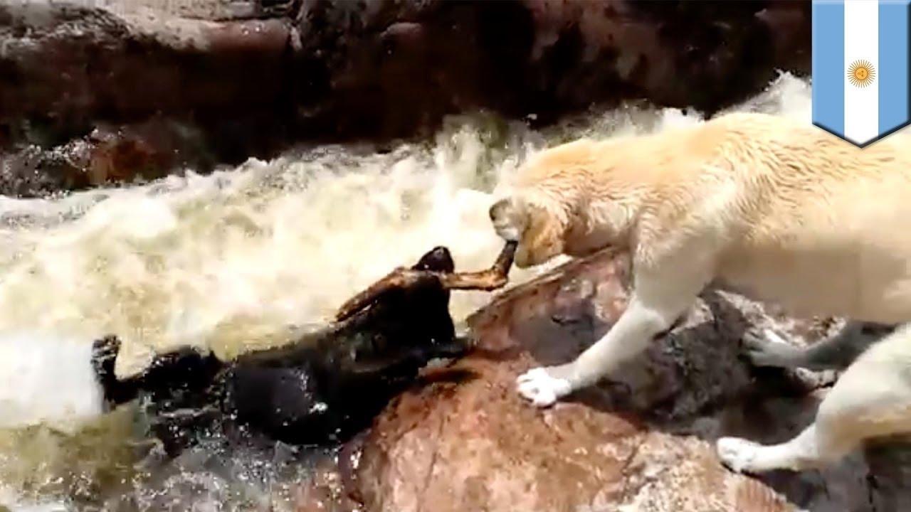 Buffalo Black Dog Rescue
