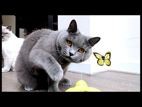FUNNY BUTTERFLY CAT TOY REVIEW! | CHRIS & EVE