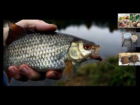 Прикормка для ловли плотви и леща. Прикормка которая не насыщает рыбу.