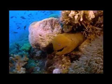 рыбалка на большом барьерном рифе видео